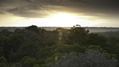 Wide angle sunrise over lush green rainforest canopy