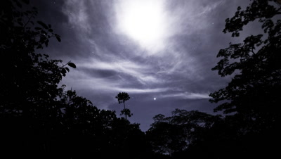 Wide angle night sky with Orion rising, stars and clouds framed by trees from rainforest clearing