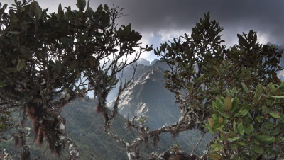 Wide angle track forward through lichen covered branches to feature view through to clouds boiling over Andes Mountains