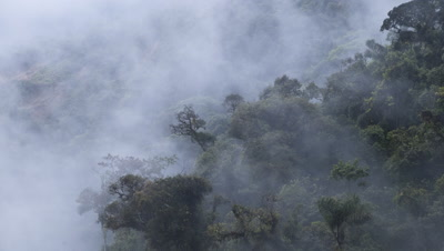 Mid shot cloud swirling over tree tops in Manu cloud forest