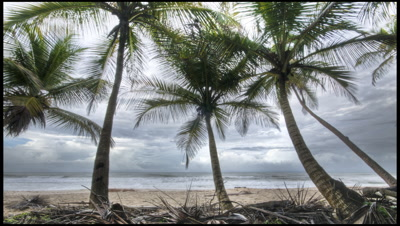 Tracking shot past coconut palms on tropical beach, Trinidad