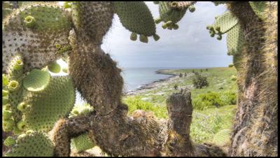 Track past Opuntia cactus on Islas Plazas, Galapagos Islands, to reveal coastal scenic