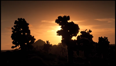 Sun sets behind Opuntia cactus on Islas Plazas, Galapagos Islands