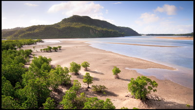 Incoming tide through mangrove forest in Japan