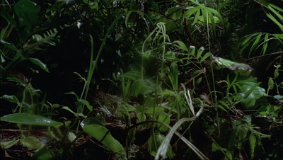 Mid shot lush green plants of forest floor growing, thriving then shrinking and dying back