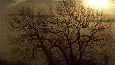 Mid shot silhouetted deciduous tree in Winter against orange wispy cloud sunset or sunrise background