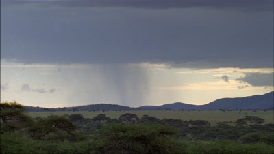 Medium wide angle dark blanket of rain clouds drop showers as they sweep across grass plains with distant escarpment
