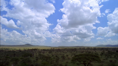 Wide angle grassland and acacia woodland under blue sky with boiling white clouds and cloud shadows dancing over woodland