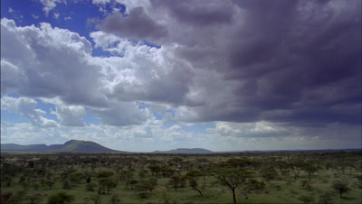 Wide angle grassland and acacia woodland under blue sky with boiling white clouds becoming sweeping rain showers