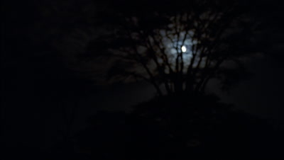 Wide angle black night sky, small moon across sky through tree branches with moonlit clouds scudding through