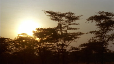 Wide angle orange sun rises over acacia tree tops from black through to flared sun and blue sky