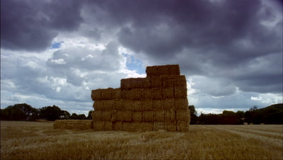 Medium wide angle field of haystacks with tractor stacking them up to become large stack centre frame, stormy grey clouds roll overhead threatening rain