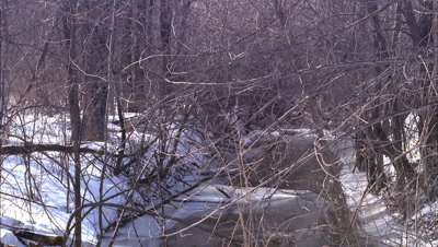 Mid shot shadows flicker over snow surrounding small pond in thicket viewed though lots of branches
