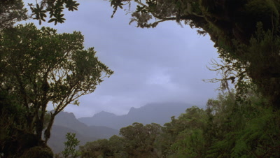 Medium wide angle view of the Peaks of the Ruwenzori Mountains framed by trees with low grey cloud racing overhead and glimpses of sun