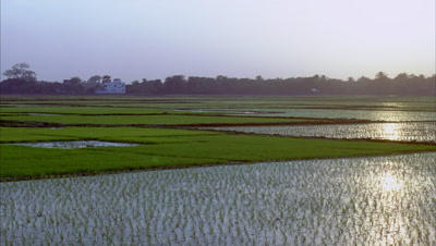 Wide angle rice paddies in various stages of growth then pans right to see orange sun set reflected in watery fields, then sky darkens