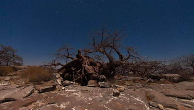 fallen Baobab, Star Scape, Kubu Island