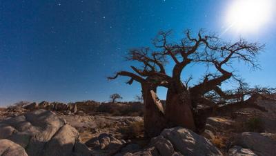Baobab, moon set, Kubu Island