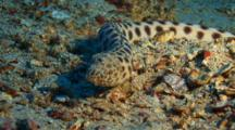 Tiger Snake Eel Portrait