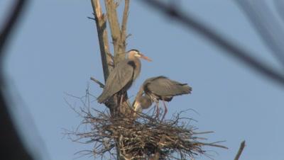 Stock Footage of Nesting Birds