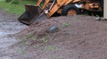 Garage, Heavy Equipment, Zoom To Snapping Turtle In Nest Hole