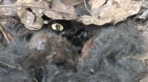 Carrion Beetles And Bottle Fly On Mole Carcass Fly Exits