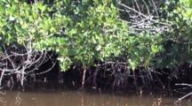 Tightly Woven Cypress Roots, Young Trees, Florida Everglades