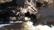 Caribou River Spring Runoff To Lake Superior, Zoom To Ice Under Cedar Tree