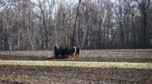 Amish Plow Team, Four Draft Horses Abreast