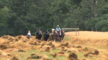 Amish Farming, Four Draft Horses Abreast, Cutting Oats, Child On Pony
