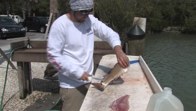 Fish Cleaning,Cleaning Redfish,Gulf of Mexico,Naples Marina