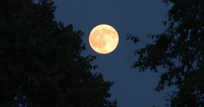 Full Moon,Deciduous Setting