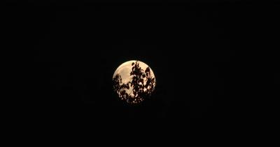 Full Moon Shiing Through Deciduous Trees