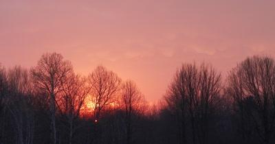 Sunlight on Bare Trees, Cumulonimbus with Mammatus Clouds, Pink Sky