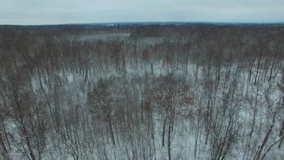 Deciduous Hardwoods in Winter, Moving Across Tops of Trees
