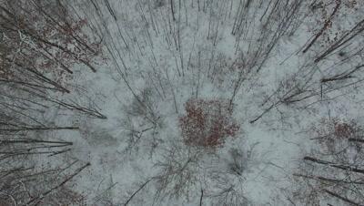 Looking Down into Hardwoods in Winter, Very Slight Twirl Motion