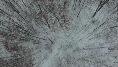 Travel Across Hardwoods in Winter, Treetop Level