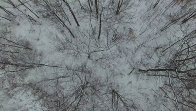 Deciduous Woods in Winter, Snow on Ground, Hardwood Forest