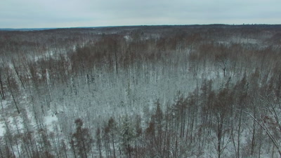 View Down into Hardwoods Tilt To Long View, Looking Over Tops of Trees in Winter