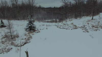 Beaver Pond, Moving Forward, Past Spruce, Into Woods in Winter