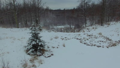 Backing Away, Out From Wooded Area to Overlook of Beaver Pond in Winter