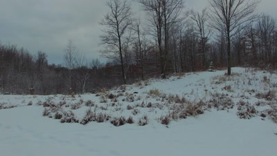 River Otter at Edge of Winter Pond, Dissappears into Snow and Woods Beyond