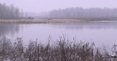Wetland in Early Spring, Light Snow on Cattails