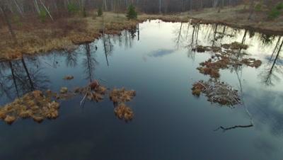 Early Spring, Beaver Pond