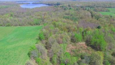 Spring Woods, Deciduous Hardwoods
