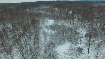 Deciduous Woods and Wetlands in Winter