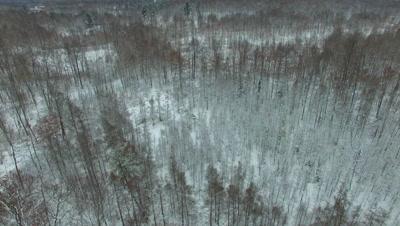 Pan across Deciduous Woods and Tamarack Trees in Winter