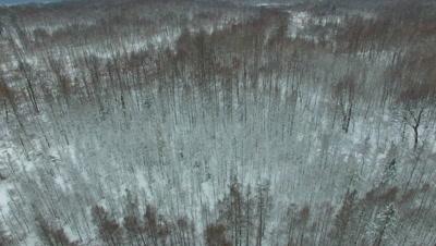 Progressing Across Deciduous Woods and Tamarack Trees in Winter