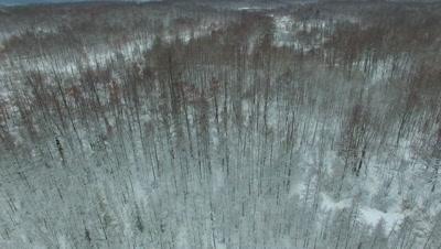 Pan Down into Tamarack Trees, Wetland Woods
