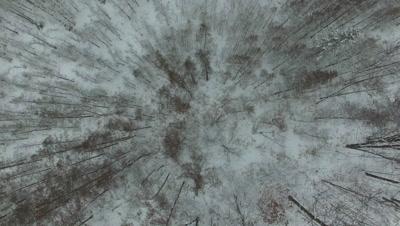 Travel Above Winter Tamaracks, Deciduous Hardwoods in Winter