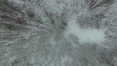 Slowly Descending Into Winter Tamaracks, Deciduous Wetlands And Hardwoods in Winter
